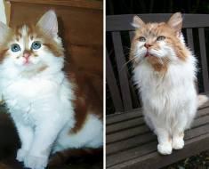Un chat adopté en 1988 célèbre son 32e anniversaire cette année