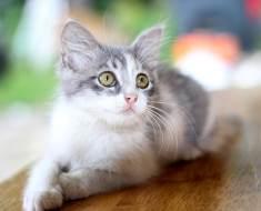 Quel âge a votre chat en âge humain ?