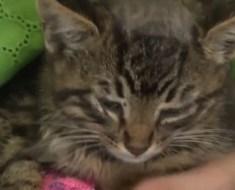 Ils trouvent ce chat abandonné et restent sans voix quand ils apprennent ce qu'il lui est arrivé !