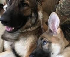 15 photos remplies d'amour et de bonne humeur qui nous font toujours plus adorer nos animaux