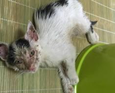 Une femme rencontre dans la rue un chaton malade et mourant qui appelle à l'aide et décide d'agir