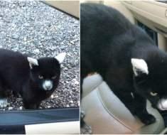 En sortant de sa voiture, un homme rencontre un chat au pelage unique
