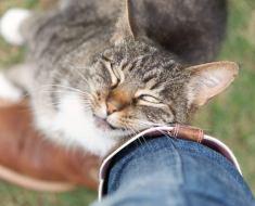 10 signes qui prouvent que votre chat vous aime