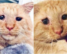 Une femme se lie d'amitié avec ce chat errant au regard triste et décide de lui offrir un foyer