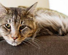 Comment les chats se comportent-ils en prenant de l'âge ?