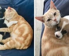 Une chatte dévastée suite à la perte de ses chatons, trouve une portée de chiots et décide de les adopter