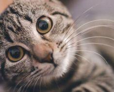 15 choses que vous ne devriez JAMAIS faire à votre chat