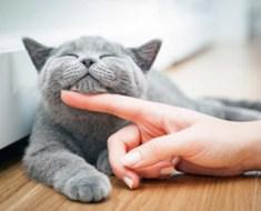 10 signes que vous pouvez réellement être un chat sous forme humaine