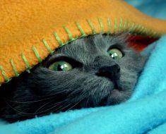 11 signes que votre chat pourrait réellement être votre «bébé»