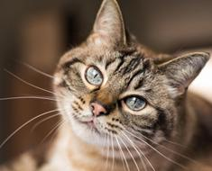 10 comportements du chat expliqués aux humains