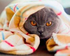 Votre chat se conduit-il mal? 4 conseils pour comprendre votre chat