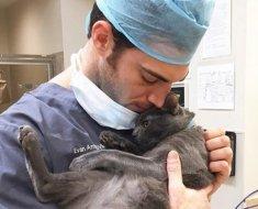 Cette clinique vétérinaire recherche son prochain « câlineur professionnel » , une personne payée à caresser des chats abandonnés toute la journée. Ça vous tente ?
