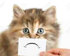 9 façons dont vos chats vous disent qu'ils sont mécontents