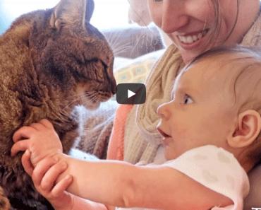 Cette première rencontre entre un enfant et des chats est terriblement touchante