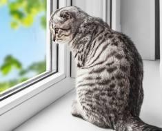5 choses que vous devez savoir sur le fait de laisser votre chat seul à la maison