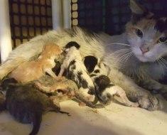 Maman chat donne naissance dans une aciérie, accepte volontiers l'aide des travailleurs