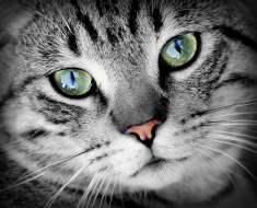 Du vétérinaire: 3 choses que vous devez savoir sur les yeux de votre chat