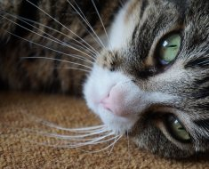 10 choses que vous ne saviez pas sur les chats