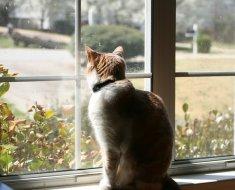 4 choses à considérer avant d'obtenir un chat