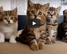 Voilà pourquoi on ne s'ennuie jamais avec des chatons. Une vidéo à voir absolument !
