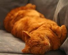 5 choses que les chats aiment plus que tout