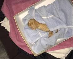 Un homme a découvert un chaton dans une poubelle et a fait exactement ce qu'il fallait faire