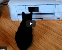 Ce petit chat découvre que la curiosité est un vilain défaut