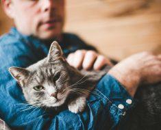 6 Signes que votre chat vous déteste secrètement