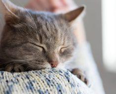 7 signes révélateurs que votre chat est heureux