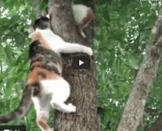 La mère chat aide son chaton à descendre de l'arbre