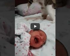 Ce chat rencontre un nouveau-né pour la première fois, c'est tellement adorable