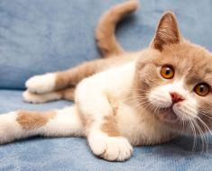 15 choses que les chats détestent absolument