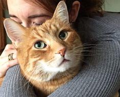 6 faits amusants sur les chats tigrés oranges