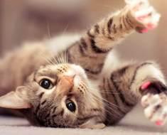 15 raisons d'être reconnaissant envers votre chat