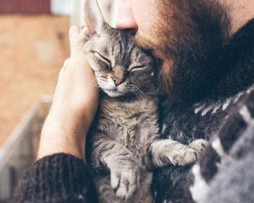Comment faire en sorte qu'un chat vous aime en 3 étapes faciles