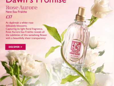 Rose Perfume New Collection Treat