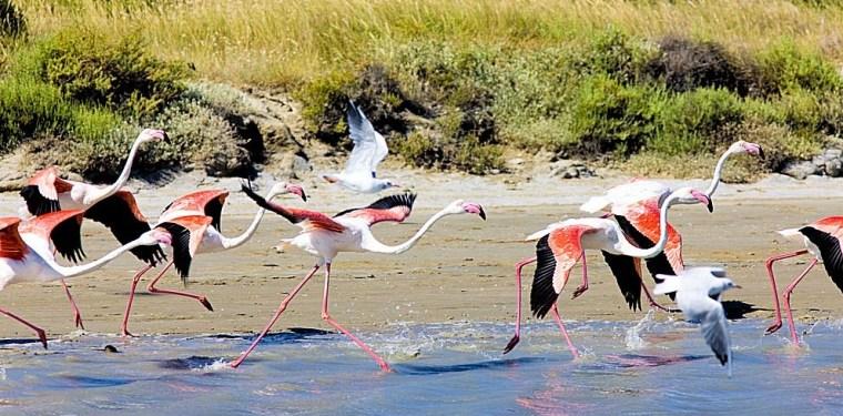 Provence-Flamingos-Parc-Regional-de-Camargue