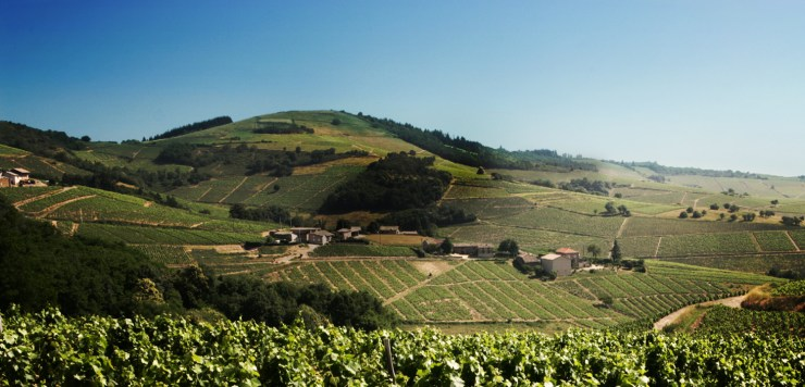 Beaujolais viticultural region
