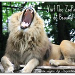 Why the Beauval Zoo is the Best?
