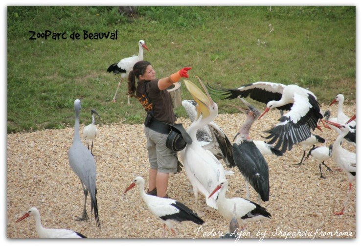 ZooParc de Beauval - Attractions