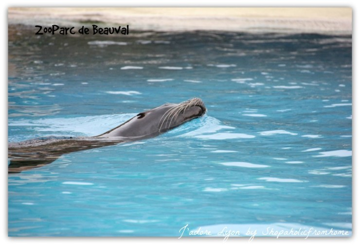 Sea Lions Show at the ZooParc de Beauval