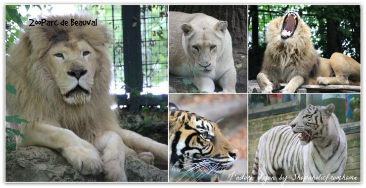 Enourmous ZooParc de Beauval
