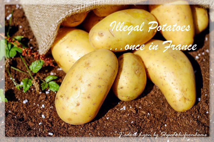 illegal-potatoes-in-france