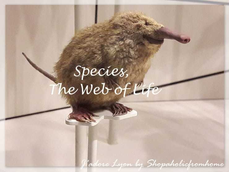 species-the-web-of-life