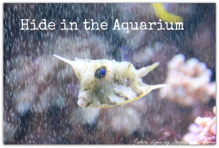 Hide in the Aquarium