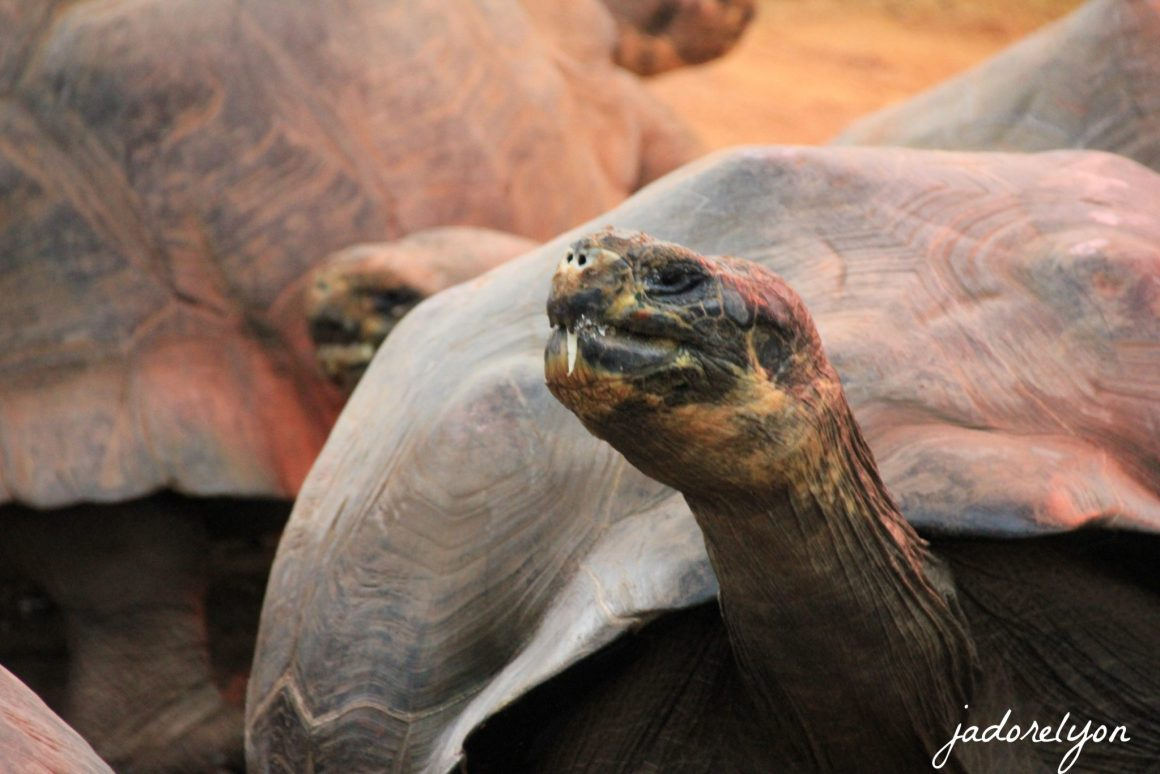 Turtles in Crocodiles Farm