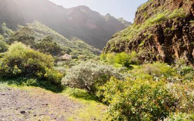 Czy warto zwiedzić Barranco de Guayadeque?
