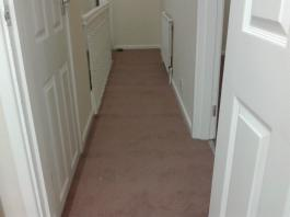 Carpet - Rental