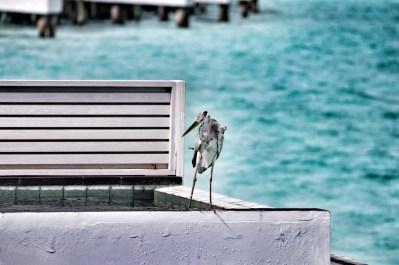 Flitterwochen Malediven: neuer Freund am Privatpool