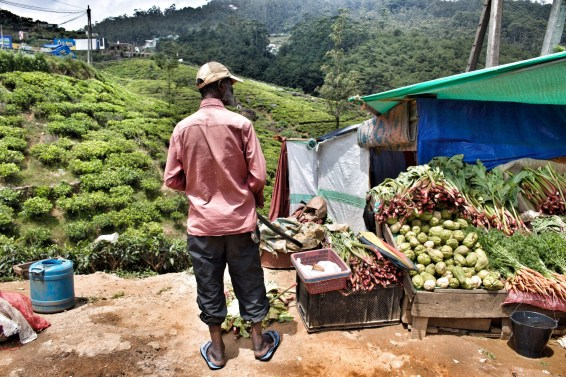 Obst und Gemüse wie in Deutschland wachst in Nuwara Eliya